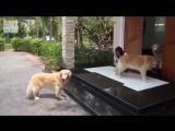 Воспитанные собачки