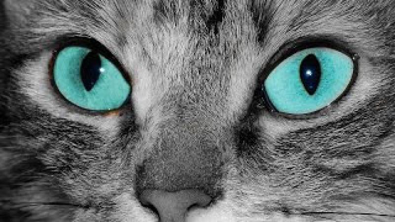Кошка существо магическое. Неразгаданный мир кошек.