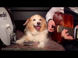 Play Guitar With Dog - Pumped Up Kicks by Foster The People