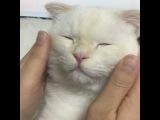 Instagram video by 순무 (SoonMoo) • Dec 19, 2016 at 4:13pm UTC