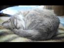 Фрося спит, она устала