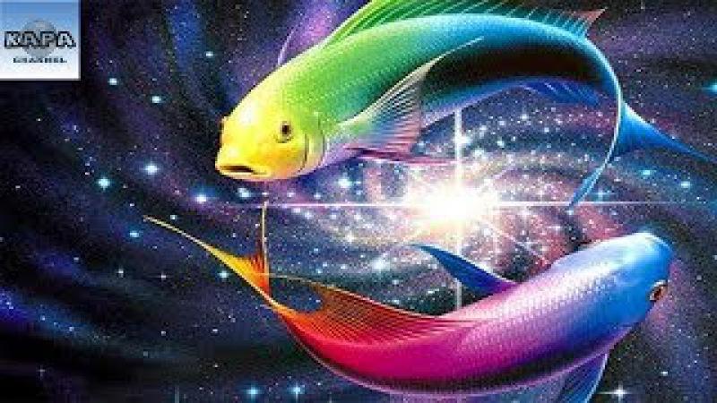 Top Những Loại Cá Tuyệt Đẹp Mang Màu Sắc Lộng Lẫy Nhất Thế Giới - KAPA Channel