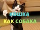 Смешное про кошку- она как собака. Кто хочет довести своего питомца до такого