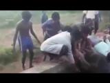Спасли тонущего слоненка