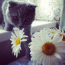 Оля Азарова фото #9