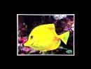 Мультики для самых маленьких Что это, Мойа Развивающий мультик, 21 серия. Подводный мир кукольный театр