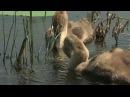 Дельта реки Волги 1 River Volga Delta 1