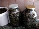 Ферментированный,зеленый и черный чай из иван-чая,сбор, сушка