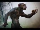 Чудовищный генетический эксперимент|Скрещивание человека и обезьяны.