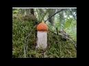 Сказочные грибы у Озера! Сентябрь 2017