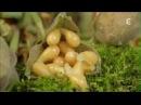 Cette superbe vidéo a fait le tour du monde - Cueillette des champignons