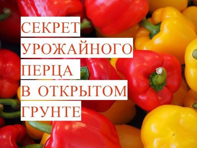 Выращивание Перца. Секрет Урожайного Перца в Открытом Грунте. (19.05.17)