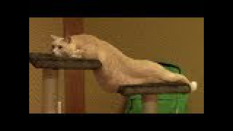 Top 10 pictures prove cat is a kind of liquid Just fun
