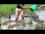 Khmer Fishing | Beautiful Girl Fishing | Amazing Fishing at Battambang | How To catch fish by hand-4