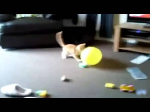Коты ПриколыЛопают шарики