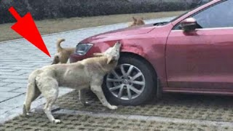 Мужчина выходил из машины и сильно пнул бродячую собаку, а позже случилось невероятное