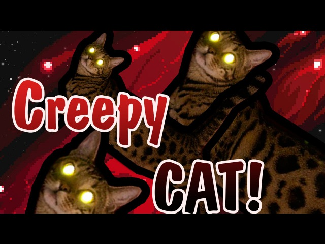 CREEPY BENGAL CAT!