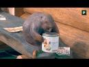 Материалы для защиты и обработки древесины на выставке Деревянный дом FORUMHOUSE