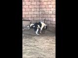 Дрочит собака не хватает хочет секса