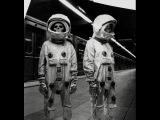 До Гагарина в Космосе побывало 16 человек, рассекреченный список тайных космонав...