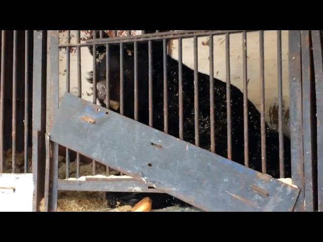 Четыре брошенных медведя