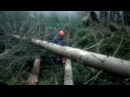 Great calamity in the forest I am working with Chainsaw Husqvarna 560XP