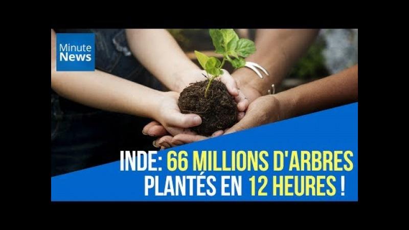 Inde : 66 millions d'arbres plantés en 12 heures !