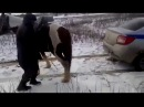 Лошадь хвостом вытаскивала полицейскую машину