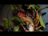Grilled marron - Australian Cuisine