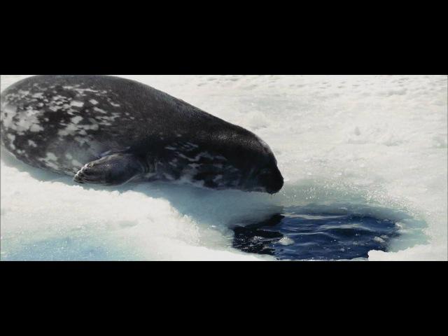 Oceans - Cold Swim