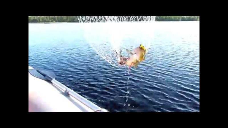 Северная Карелия 17. Крупный улов