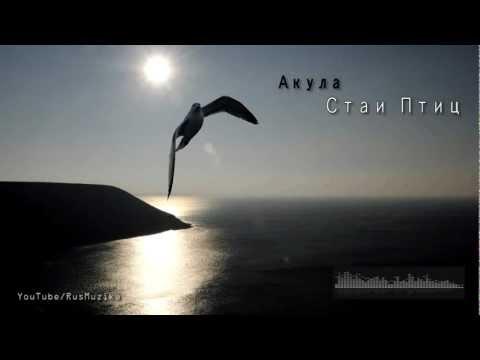 Russian Music Акула Стаи Птиц