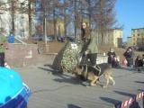 Собаки ВОВ. Санитарно-разыскная служба. Кристина Павлова и Джина