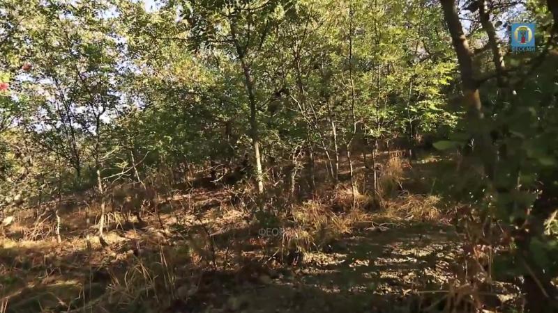 2017 Крым, Феодосия - Осенний Кара-даг. Пешеходная тропа