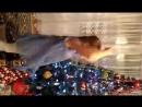 Video-0-02-05-9df8e1ea77ca4c4f9f06015e934ecb2016619661fbc37f10f7f6cdd4d3fac45d-V