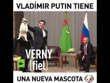 El cachorro de pastor de Asia Central que le regal