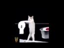 Кот стирает бельё, большая стирка