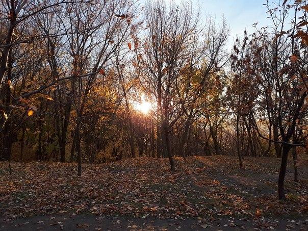 Загородный парк. Фото: Вера Агапова