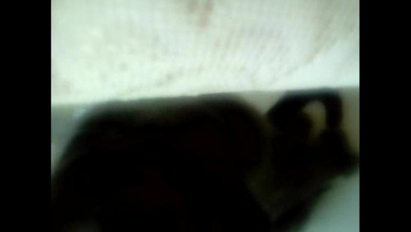 Мой любимый котик