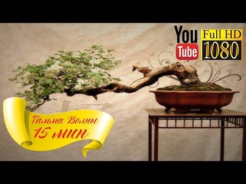 HD 🌅 Гамма Волны 🌅 Энергия Ци 🌅 Лучшая Музыка для Йоги, Цигун, Рейки 🌅 Дзен Релакс Баланс