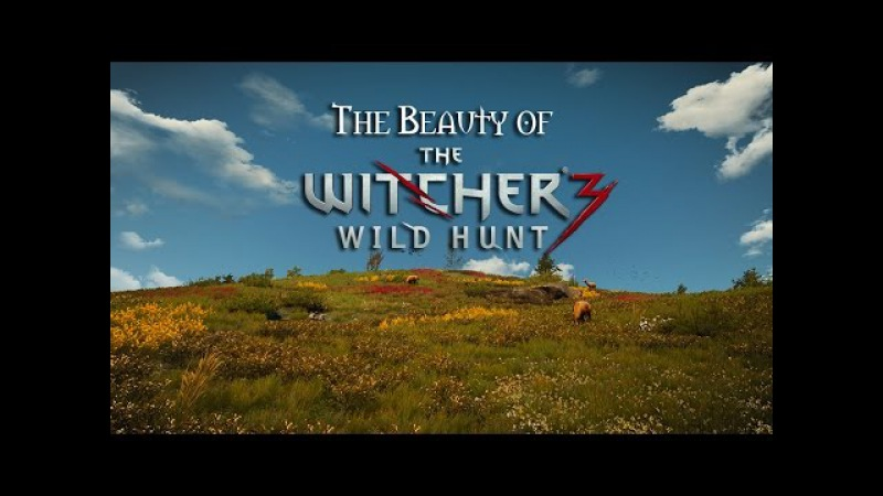 Beauty of The Witcher 3: Wild Hunt