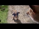 Видео к мультфильму «Кролик Питер» (2018): Трейлер (дублированный)