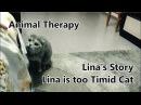 Animal Therapy I She is timid cat I Lina's Story I Scottish Fold I Cat