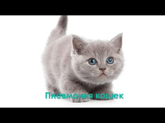 Пневмония кошек