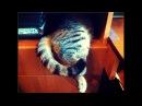 Бомба Смешная И Веселая Кошка Дуська / СеменАлиса