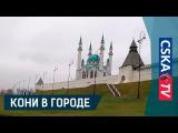Кони в городе: Казань