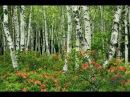 Берёза Музыка Сергея Чекалина Birch Music by Sergei Chekalin Russian music
