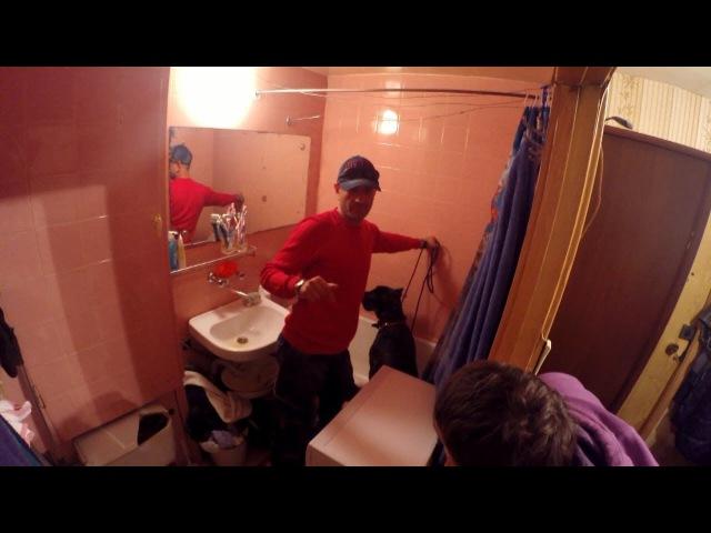 Страх в ванной комнате Кане корсо Тайсон