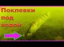 Подводные съемки поклевок ОКУНЯ СУДАКА Рыбалка Ловля на поплавочную удочку fishing Поклевки