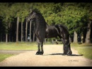 Truus Van Het Houkumhuis ~ Model mare ~ Little River Friesians